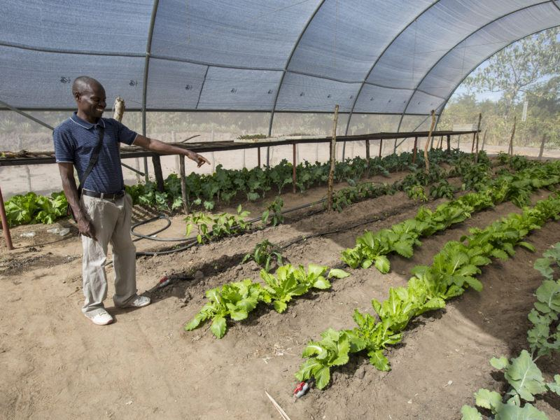 Image of a man inside a poly tent where crops are growing